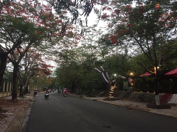 Thêm một cây phượng gần trường Đại học ở Sài Gòn bật gốc đè trúng xe tải, nhiều người đi đường hoảng hồn-4