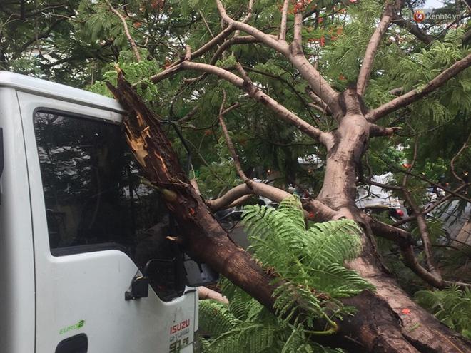 Thêm một cây phượng gần trường Đại học ở Sài Gòn bật gốc đè trúng xe tải, nhiều người đi đường hoảng hồn-6