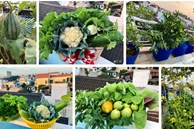 Chỉ với 2 năm kinh nghiệm làm vườn, mẹ đảm ở Đồng Nai đã biến sân thượng 50m² thành 'trang trại' thu nhỏ