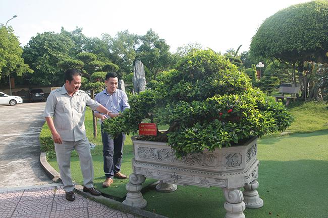 Dàn sơ ri khủng giá tiền tỷ của đại gia chơi cây cảnh khét tiếng Thái Nguyên-7