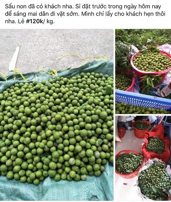 Sấu non đắt hơn trái cây nhập khẩu vẫn hút khách, tiểu thương hốt bạc-6