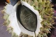 Vừa mở quả sầu riêng cô gái giật bắn người vì ngỡ một con chuột béo nằm bên trong, nhưng hóa ra lại là múi sầu riêng màu đen lần đầu thấy trong đời