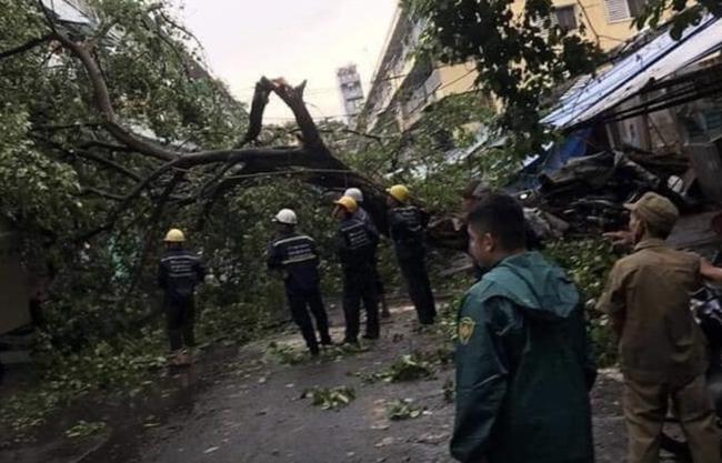 TP.HCM: Sau cơn mưa lớn kèm gió giật, nhiều cây xanh lại gãy đổ đè nhà dân, đè cả người đi đường-1