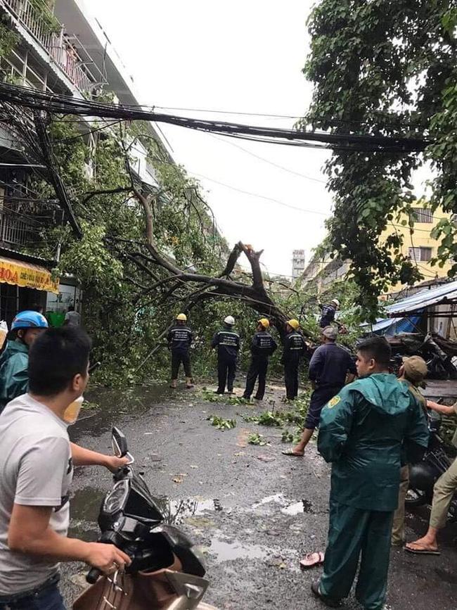 TP.HCM: Sau cơn mưa lớn kèm gió giật, nhiều cây xanh lại gãy đổ đè nhà dân, đè cả người đi đường-2