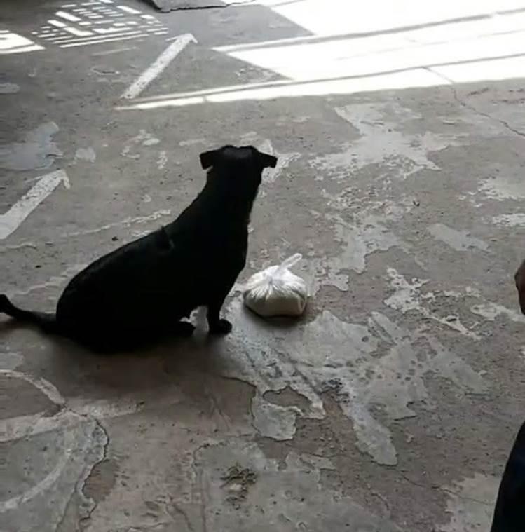 """CLIP: Rụng tim"""" với chú chó xoáy Phú Quốc thay chủ tật nguyền xếp hàng nhận gạo-1"""