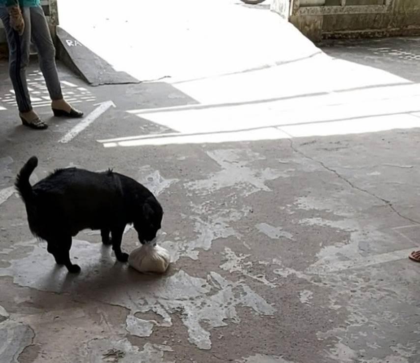 """CLIP: Rụng tim"""" với chú chó xoáy Phú Quốc thay chủ tật nguyền xếp hàng nhận gạo-2"""