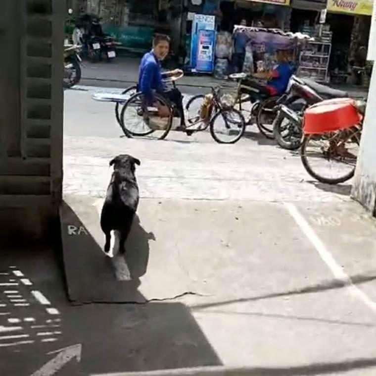 """CLIP: Rụng tim"""" với chú chó xoáy Phú Quốc thay chủ tật nguyền xếp hàng nhận gạo-3"""