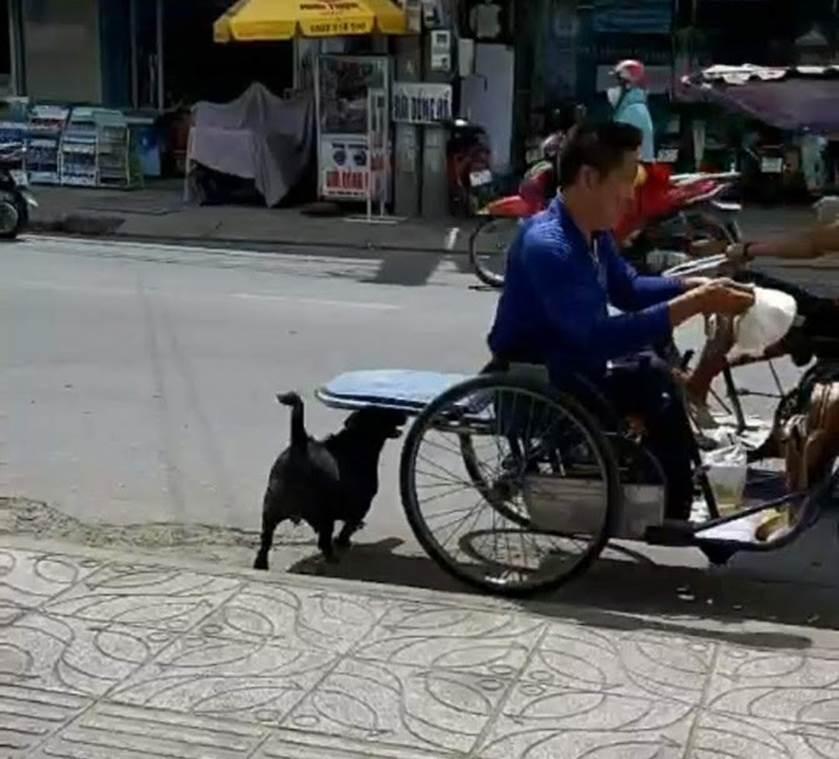 """CLIP: Rụng tim"""" với chú chó xoáy Phú Quốc thay chủ tật nguyền xếp hàng nhận gạo-5"""
