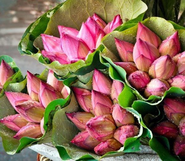 Mẹo phân biệt hoa sen và quỳ chuẩn, người bán hoa không bao giờ nói cho bạn-1