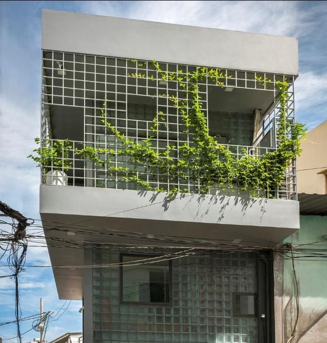 Ngỡ ngàng nhà kính 18m2 độc đáo được cải tạo từ nhà hoang ở Sài Gòn-1