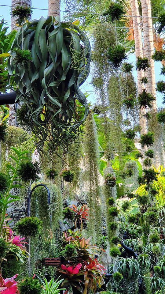 Ngỡ ngàng với khu vườn 300m2 đẹp như tiên cảnh giữa TP Cần Thơ-2