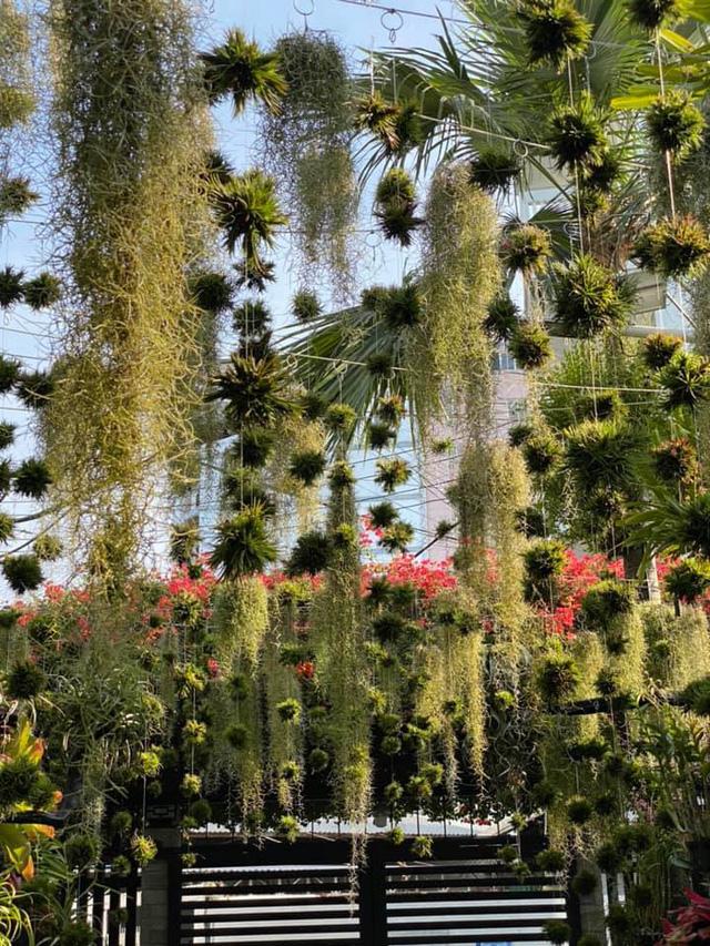 Ngỡ ngàng với khu vườn 300m2 đẹp như tiên cảnh giữa TP Cần Thơ-3