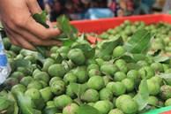 Sấu non đầu mùa giá 65 ngàn/kg, khách muốn mua nhiều tiểu thương cũng lắc đầu vì 'khan' hàng