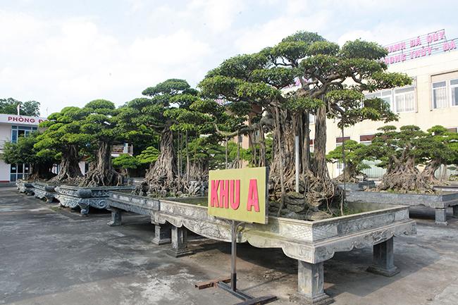 Đại gia Thái Nguyên gây sốt với dàn báu vật trăm tuổi giá triệu USD-1