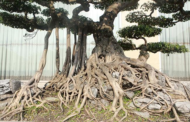 Đại gia Thái Nguyên gây sốt với dàn báu vật trăm tuổi giá triệu USD-10