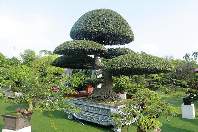 Đại gia Thái Nguyên gây sốt với dàn báu vật trăm tuổi giá triệu USD-11