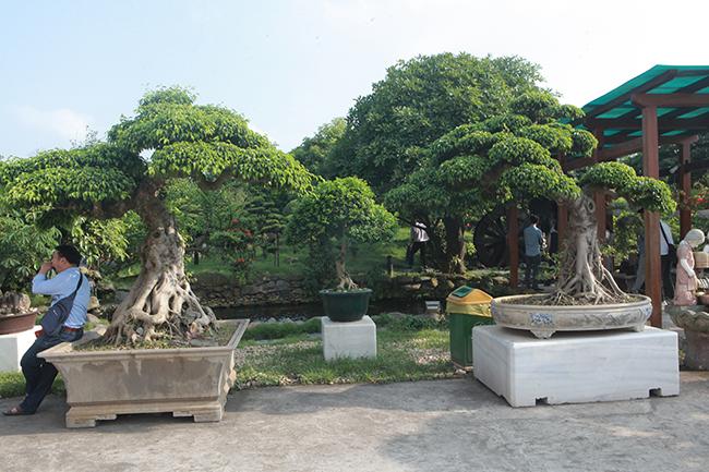 Đại gia Thái Nguyên gây sốt với dàn báu vật trăm tuổi giá triệu USD-12