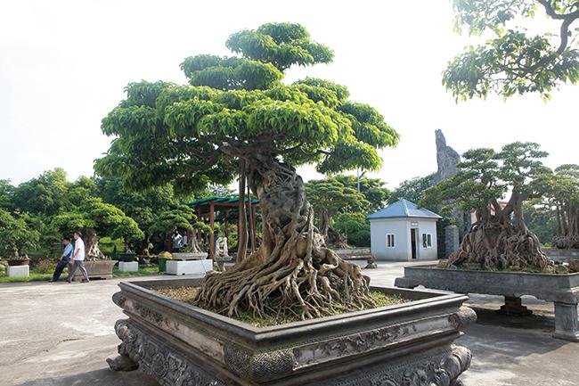 Đại gia Thái Nguyên gây sốt với dàn báu vật trăm tuổi giá triệu USD-14