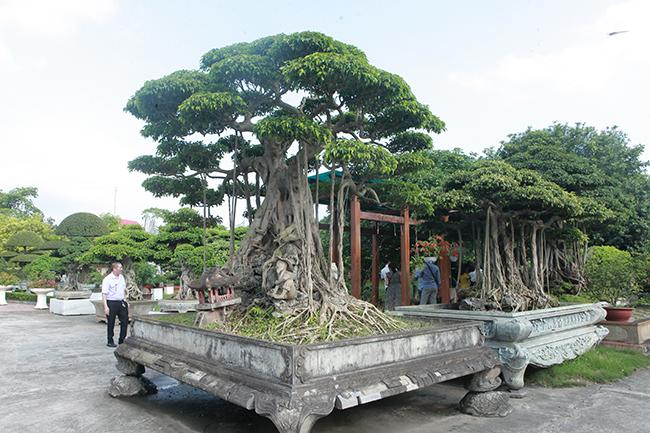 Đại gia Thái Nguyên gây sốt với dàn báu vật trăm tuổi giá triệu USD-15