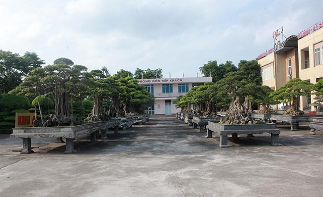 Đại gia Thái Nguyên gây sốt với dàn báu vật trăm tuổi giá triệu USD-2
