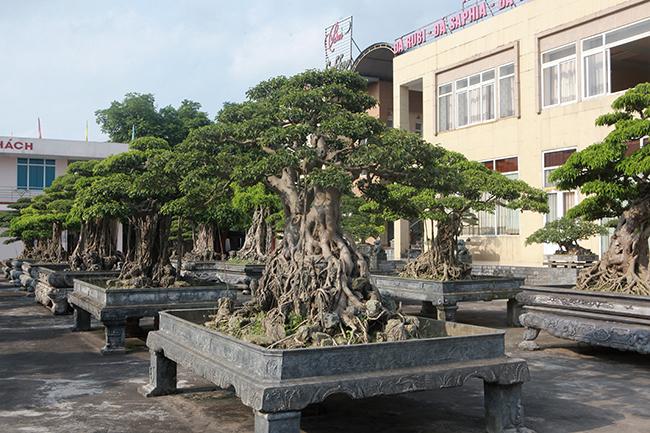 Đại gia Thái Nguyên gây sốt với dàn báu vật trăm tuổi giá triệu USD-3