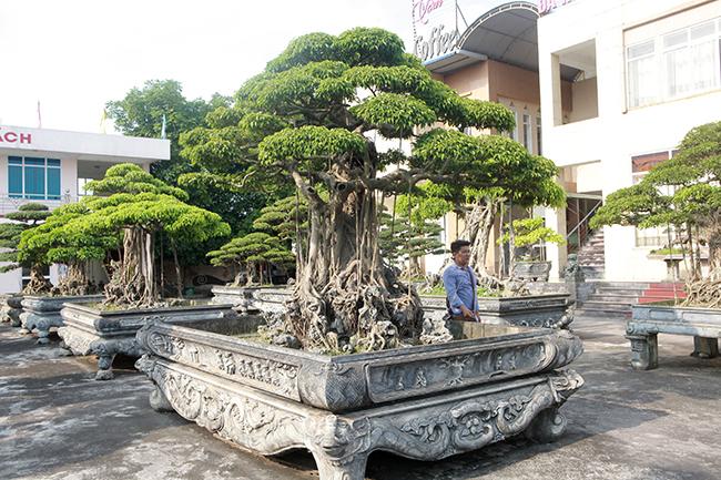 Đại gia Thái Nguyên gây sốt với dàn báu vật trăm tuổi giá triệu USD-4