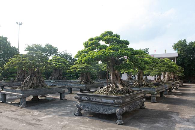 Đại gia Thái Nguyên gây sốt với dàn báu vật trăm tuổi giá triệu USD-5
