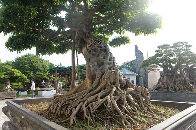 Đại gia Thái Nguyên gây sốt với dàn báu vật trăm tuổi giá triệu USD-6