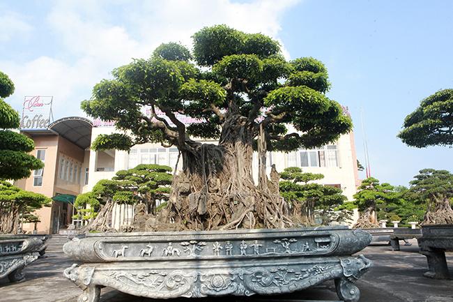 Đại gia Thái Nguyên gây sốt với dàn báu vật trăm tuổi giá triệu USD-7