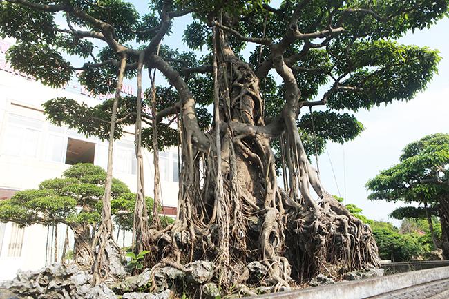 Đại gia Thái Nguyên gây sốt với dàn báu vật trăm tuổi giá triệu USD-8