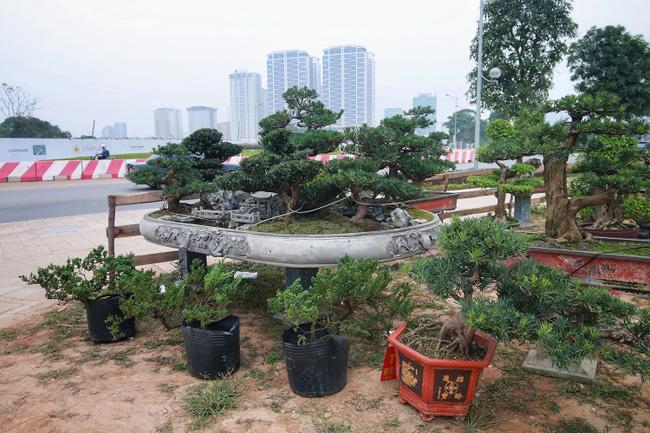 Chiêm ngưỡng tác phẩm Đồi tùng La Hán độc nhất vô nhị giá 350 triệu-10