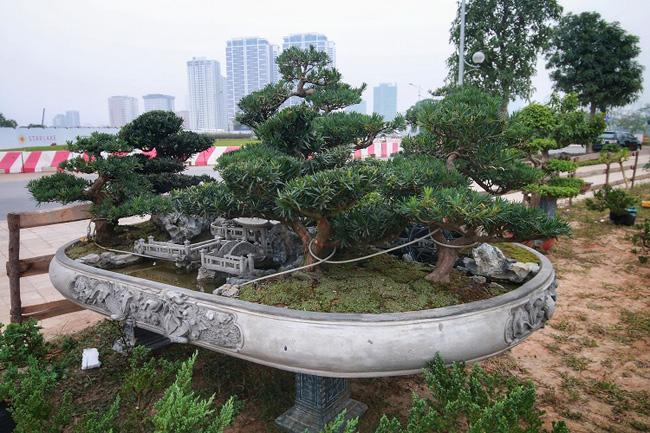 Chiêm ngưỡng tác phẩm Đồi tùng La Hán độc nhất vô nhị giá 350 triệu-2