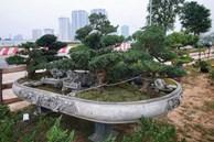 Chiêm ngưỡng tác phẩm 'Đồi tùng La Hán' độc nhất vô nhị giá 350 triệu