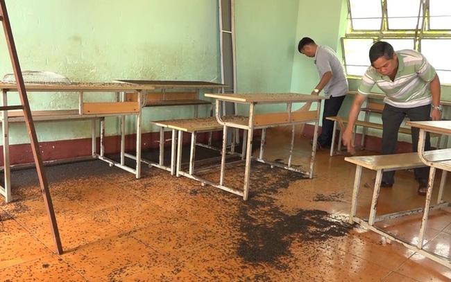 Bọ đậu đen tấn công trường học: Giáo viên, học sinh vất vả chống đỡ-2