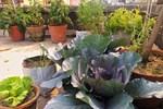 Sân thượng nắng chói chang vẫn trồng cả 'trang trại' rau quả xanh um nhờ bí quyết đơn giản của chàng trai trẻ