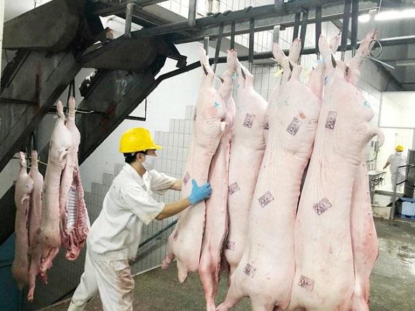 Sau quyết định nhập lợn sống về giết mổ để bình ổn giá, giá lợn hơi giảm nhẹ nhưng giá thịt ở chợ dân sinh vẫn ở mức gần 200 nghìn đồng/kg-2