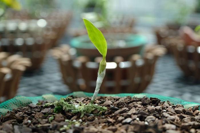 Vườn lan đột biến hơn 100 loại, gần 10 tỷ ở Mê Linh-2