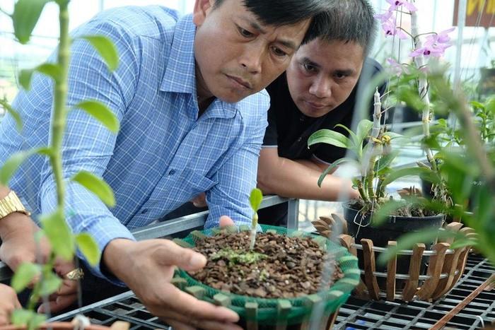 Vườn lan đột biến hơn 100 loại, gần 10 tỷ ở Mê Linh-3