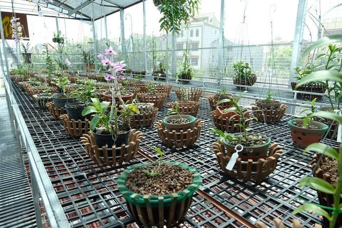 Vườn lan đột biến hơn 100 loại, gần 10 tỷ ở Mê Linh-4