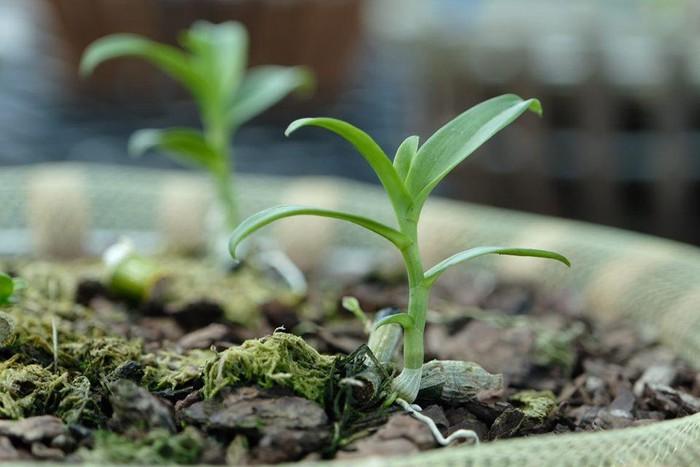 Vườn lan đột biến hơn 100 loại, gần 10 tỷ ở Mê Linh-6