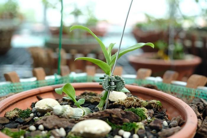 Vườn lan đột biến hơn 100 loại, gần 10 tỷ ở Mê Linh-9