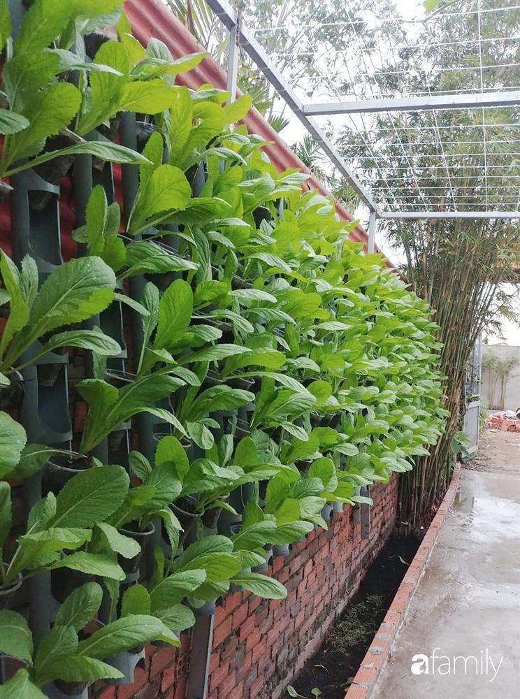 Không có đất trồng rau, mẹ đảm ở Sài Gòn vẫn tạo ra được vườn rau sạch trên tường nhờ tận dụng ống nhựa bỏ đi-1