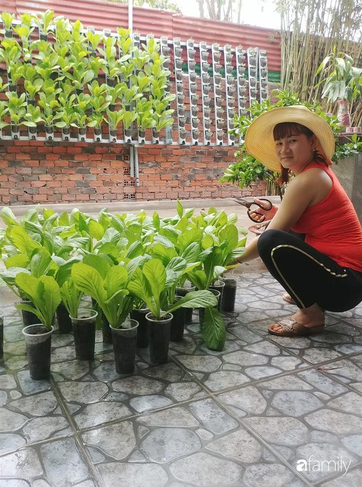Không có đất trồng rau, mẹ đảm ở Sài Gòn vẫn tạo ra được vườn rau sạch trên tường nhờ tận dụng ống nhựa bỏ đi-2