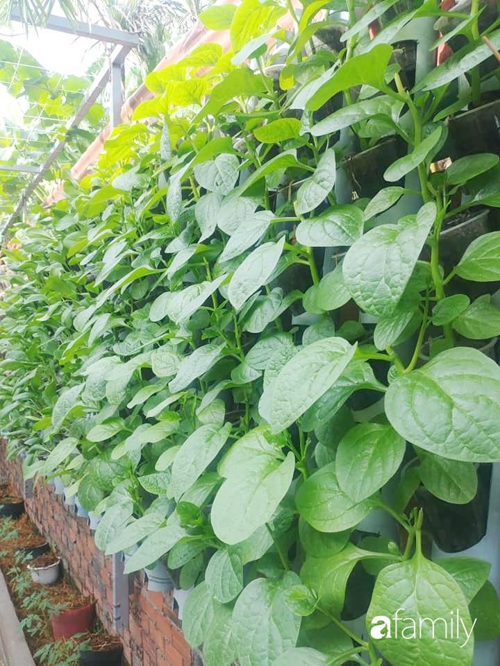 Không có đất trồng rau, mẹ đảm ở Sài Gòn vẫn tạo ra được vườn rau sạch trên tường nhờ tận dụng ống nhựa bỏ đi-7