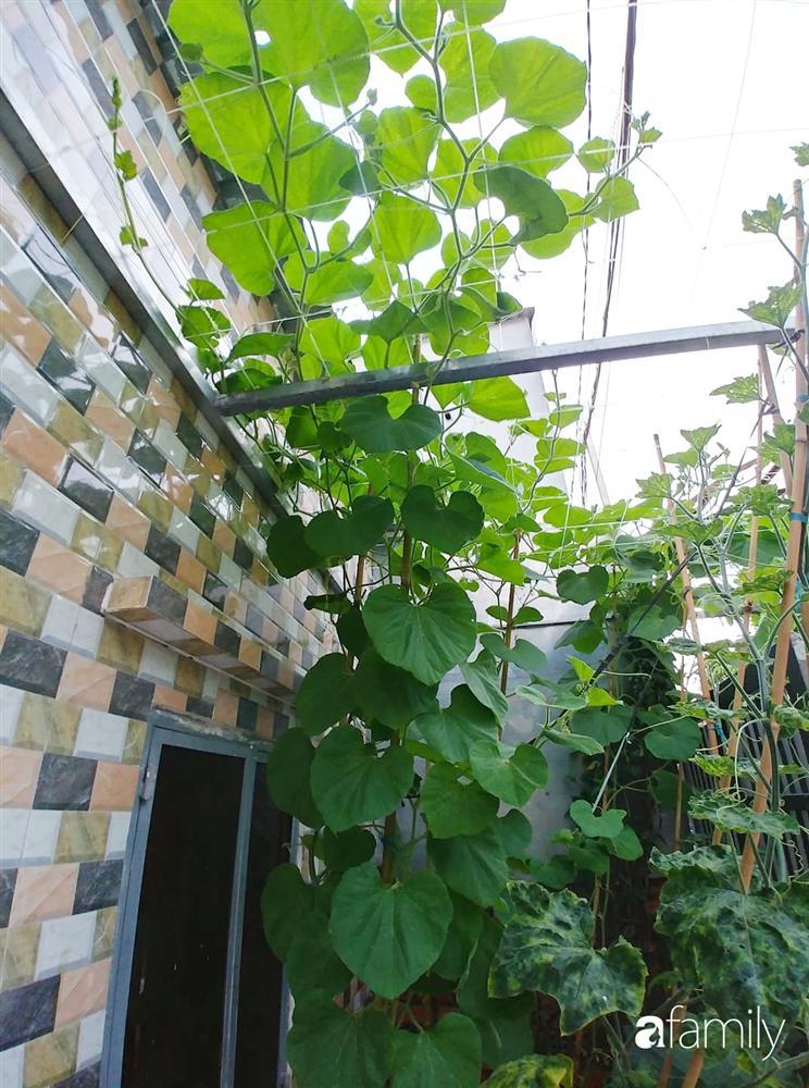 Không có đất trồng rau, mẹ đảm ở Sài Gòn vẫn tạo ra được vườn rau sạch trên tường nhờ tận dụng ống nhựa bỏ đi-9