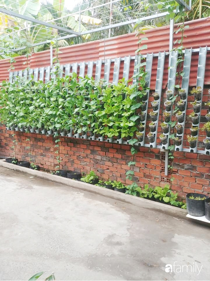 Không có đất trồng rau, mẹ đảm ở Sài Gòn vẫn tạo ra được vườn rau sạch trên tường nhờ tận dụng ống nhựa bỏ đi-13