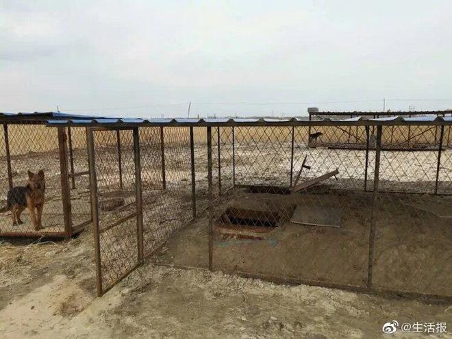 Chiêu ẩn thân độc đáo của dân đào bitcoin trộm ở Trung Quốc: Chui dưới mộ, trốn trong chuồng chó...-2