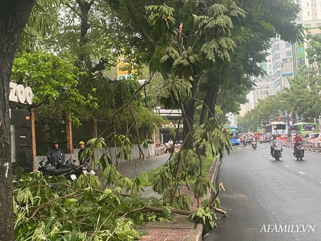 TP.HCM: Mưa lớn khiến đường ngập, cây gãy và kẹt xe, người dân lại khốn khổ lội bì bõm về nhà-3