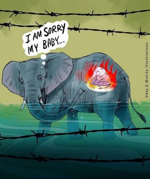 Vụ voi mẹ mang thai chết tức tưởi vì ăn phải dứa nhồi pháo nổ: Những bức tranh tưởng niệm chứa đựng nỗi đau khiến thế giới phải suy ngẫm-1