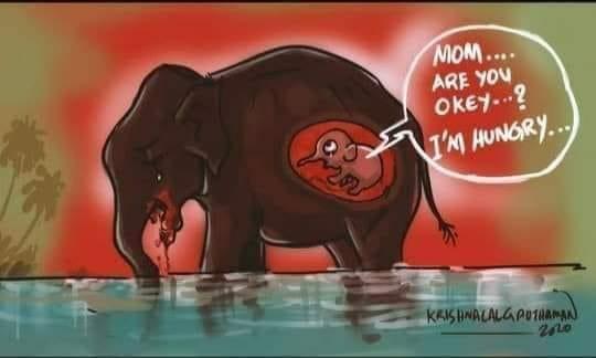 Vụ voi mẹ mang thai chết tức tưởi vì ăn phải dứa nhồi pháo nổ: Những bức tranh tưởng niệm chứa đựng nỗi đau khiến thế giới phải suy ngẫm-12